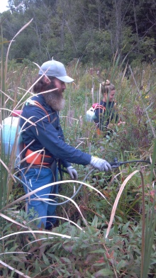 BlueHeronMinistries_backpack spraying cattails_ Dallas Lake 2014