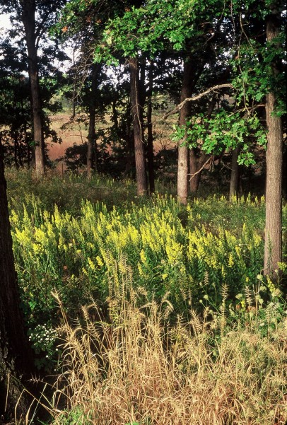 Open Oak Woodland