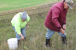 BlueHeronMinistries_Eagle Cemetery Seed Collection_ Fall 2014 (4)