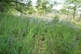 blueheronministries_-badger-barrens_-spring-2015-10