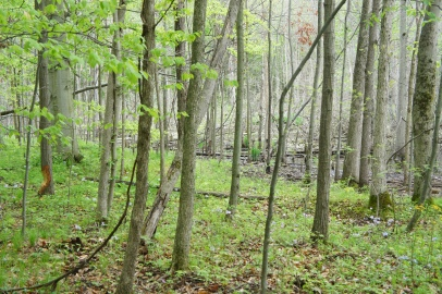 blueheronministries_latierra-nature-sanctuary_-spring-2015-15