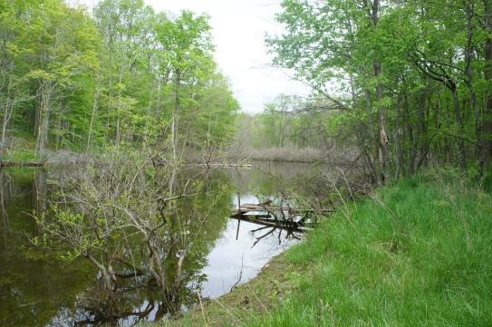 blueheronministries_latierra-nature-sanctuary_-spring-2015