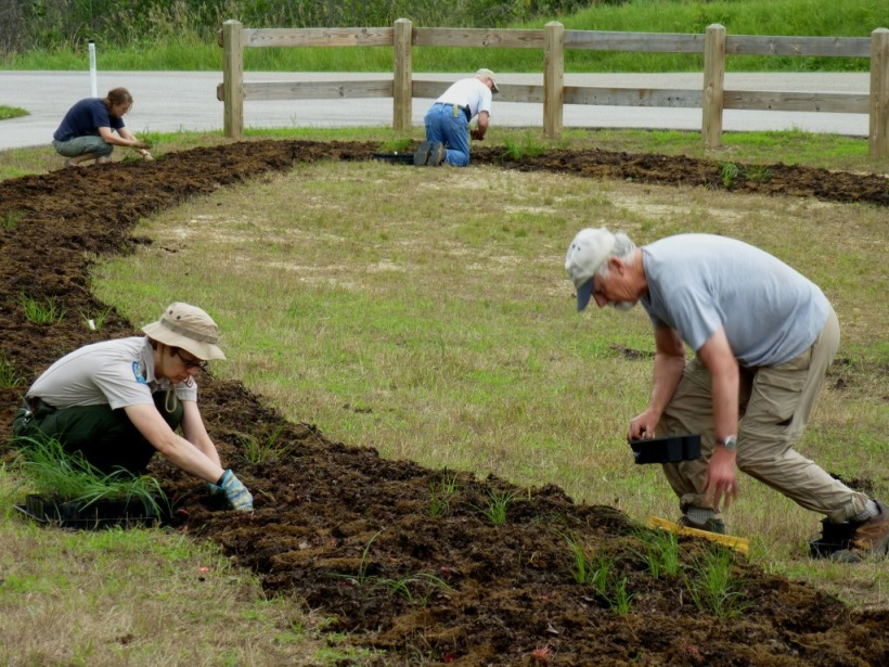 BlueHeronMinistries_ Trine SRA road island plantings 6_30_15 012_ volunteer