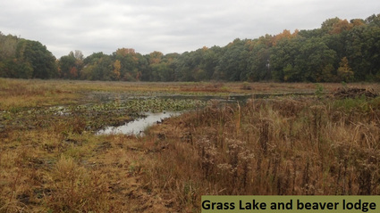 grass-lake-and-beaver-lodge-3-october-2016