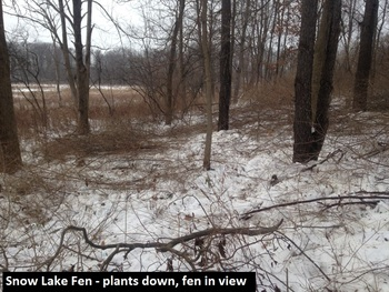 snow-lake-fen-plants-down-fen-in-view