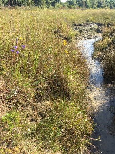 A spring run cuts through the peat at Nasby Fen (2)