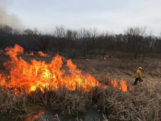 Josh stringing fire in an early January 2020 prescribed fire