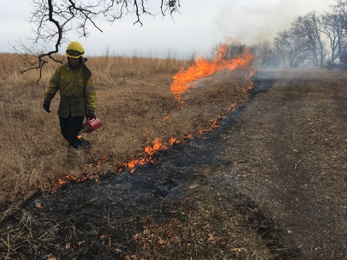 On a rare Sunday afternoon opportunity, Emily strings a line of fire during our annual prescribed fire at Tri-State Airport's prairie remnant